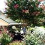 Pine Creek Country Inn