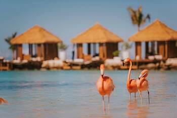 renaissance aruba beach resort casino
